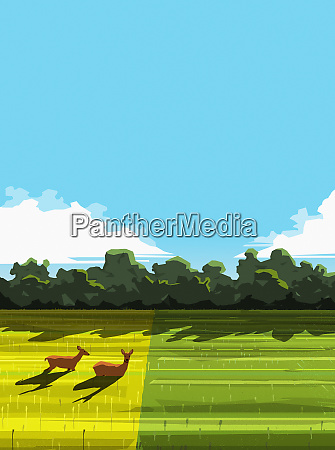 deer relaxing in sunny rural field