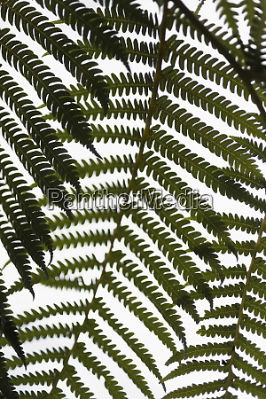 close up green fern branches against