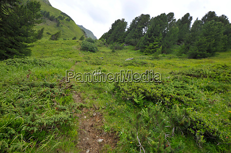paths on a mountain pasture