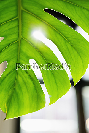 close up vibrant green tropical plant