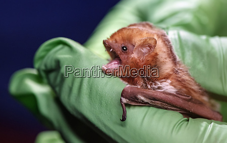 close up bat being held by