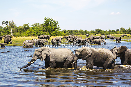 herd of elephants gathering at water