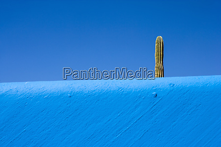 cactus plant rising above a blue