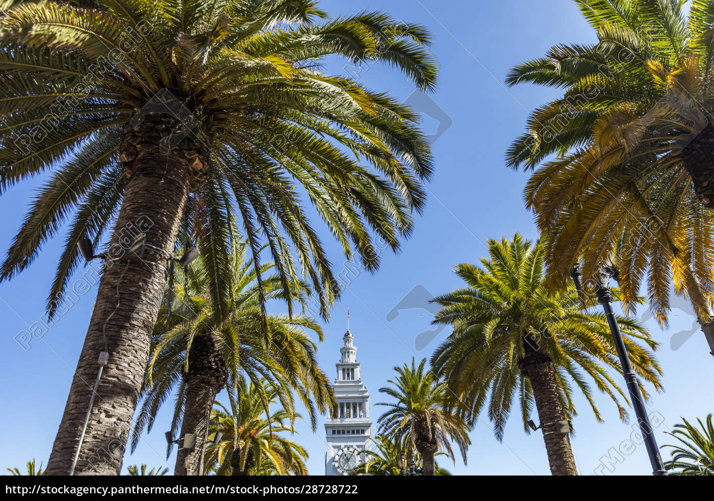 usa, , california, , san, francisco, , palm, trees - 28728722