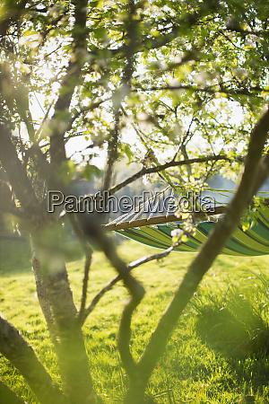 hammock and tree in sunny idyllic