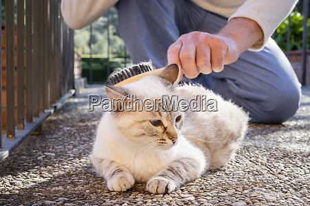 senior man brushing cat lying on