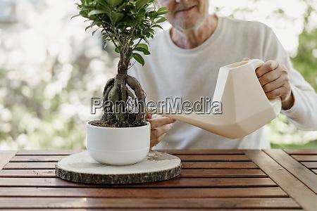 senior man watering bonsai plant