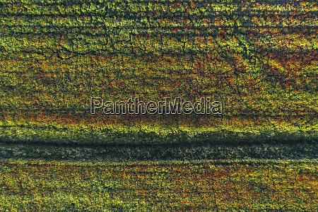 drone view of poppy field in