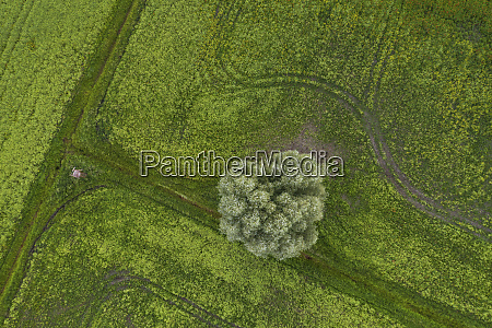 germany brandenburg drone view of green