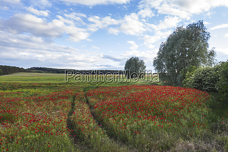 germany brandenburg drone view of red