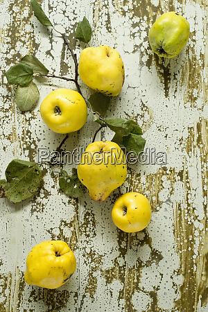 fresh quinces cydonia oblonga lying on
