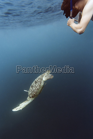 indonesia bali underwater view of male