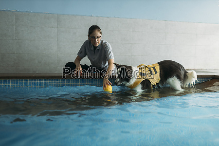 female physiotherapist assisting border collie in