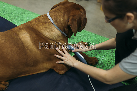 physiotherapist giving laser treatment to old