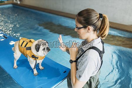 physiotherapist training pug dog on inflatable