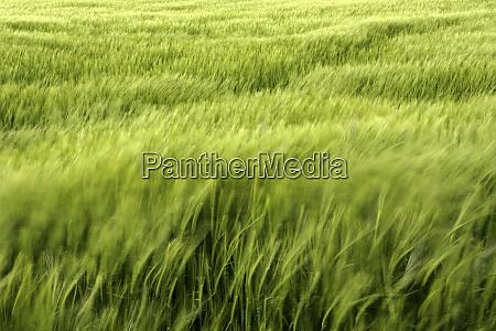 spain province of guadalajara vast green