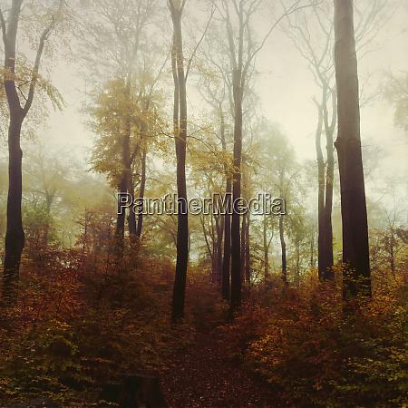 germany north rhine westphalia wuppertal misty