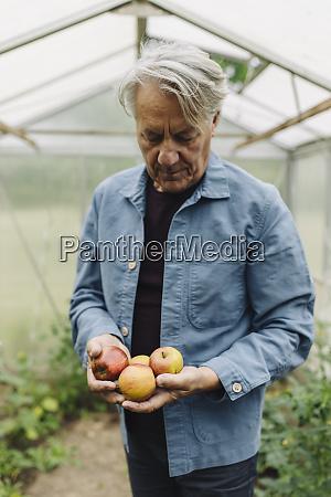 senior man holding organic apples at