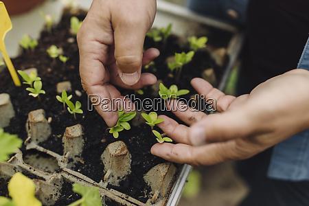 close up of man examining seedlings