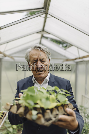 senior businessman holding plants in a