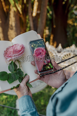 womans hand holding book pink rose