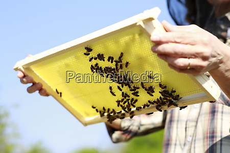 midsection of woman holding beehive on