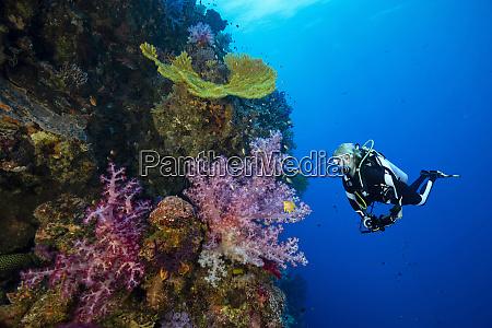 palau ulong channel diver exploring soft
