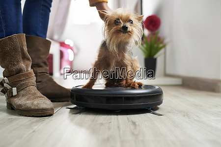 woman placing yorkshire terrier on robotic
