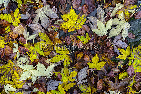 directly above view of fallen leaves