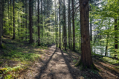 germany bavaria egling footpath in springtime