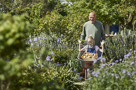 grandfather with granddaughter in wheelbarrow in