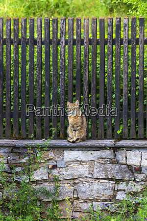 tabby cat sitting on stone wall