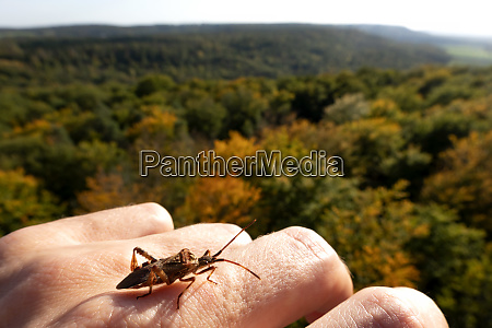 germany bavaria ebrach insect crawling on