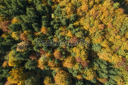 drone view ofdeciduousforest in autumn