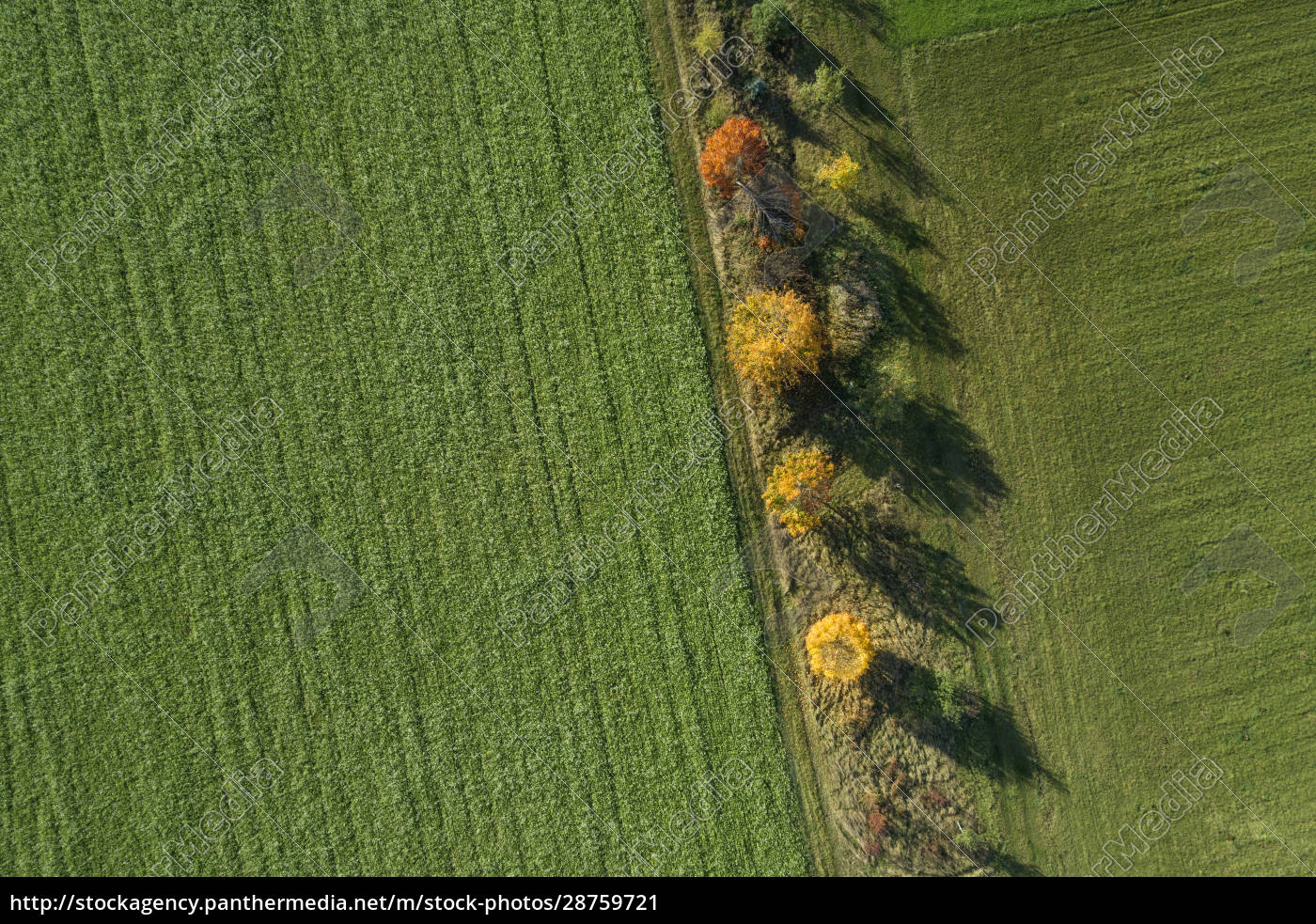 germany, , bavaria, , drone, view, of, row - 28759721