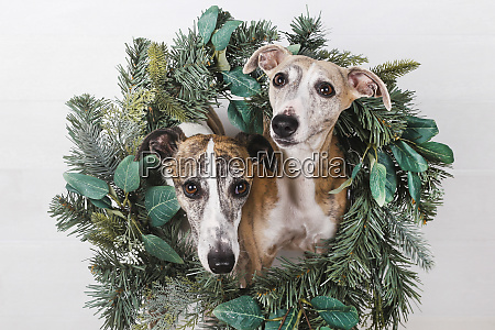 close up of dogs with green