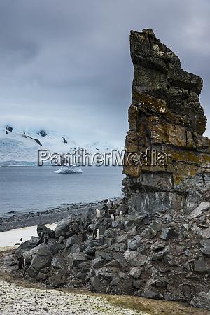 penguin colony at foot of coastal