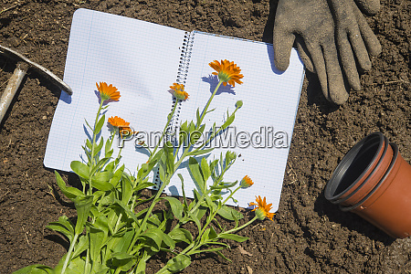 flowers with pots by book and