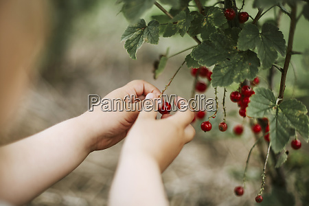 girl picking currants