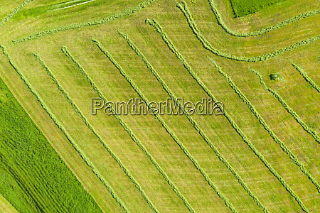 drone, view, of, green, mowed, field - 28761302