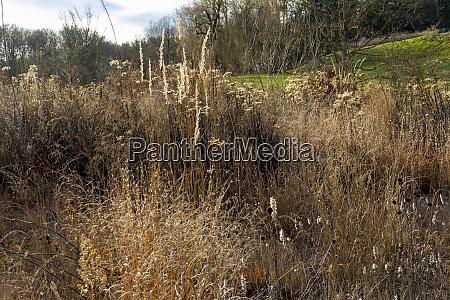 arid vegetation scenery