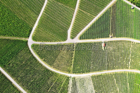vineyard from above with paths and