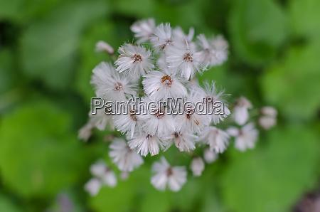 white soft flowers