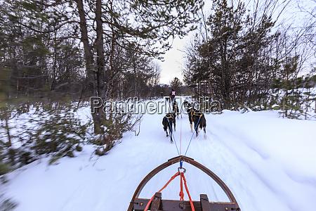alaskan husky pulled dog sleds speed