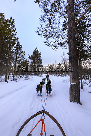 alaskan husky pulled dog sleds speed