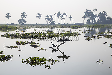 backwaters alappuzha alleppey kerala india asia