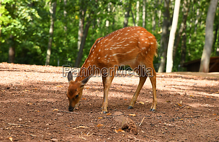 a deer in the park
