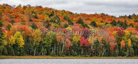 autumn colours paint the trees in