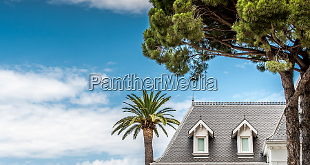 palm tree and hotel blanc on