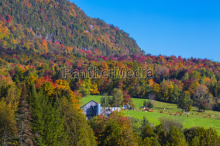 autumn forest and mountains with vibrant